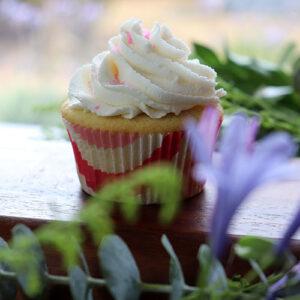 6 Custom Vegan Cupcakes